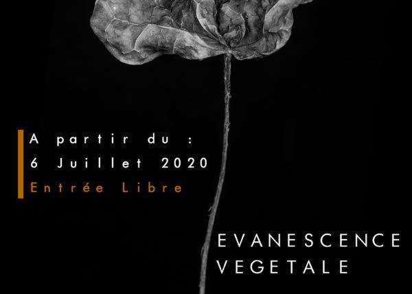 Affiche de l'exposition Evanescence Végétale